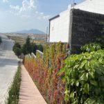 Externa Borgo-min